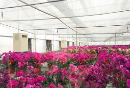 青州市锦绣兰业科技,2万平方米取暖,室内温度26-30℃