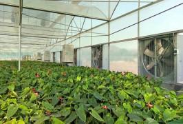 山东锦绣兰业花卉科技有限公司, 采用大棚冷暖双效一体机,室内温度 26-30℃